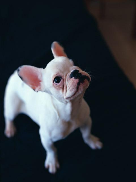 子犬の現物確認と対面販売の義務化は必要なのか