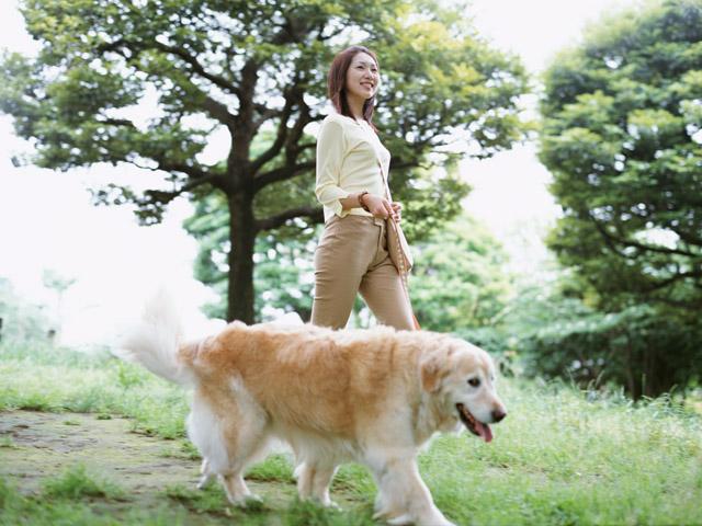 犬の散歩は毎日必要か?