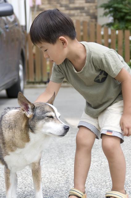 一人で犬のしつけトレーニングが出来ない場合