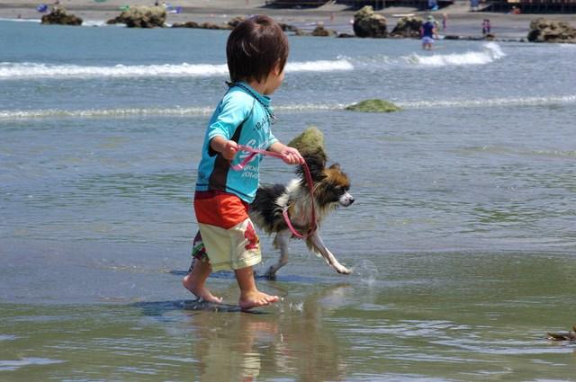 犬と一緒に水遊び、犬のプールとライフジャケット