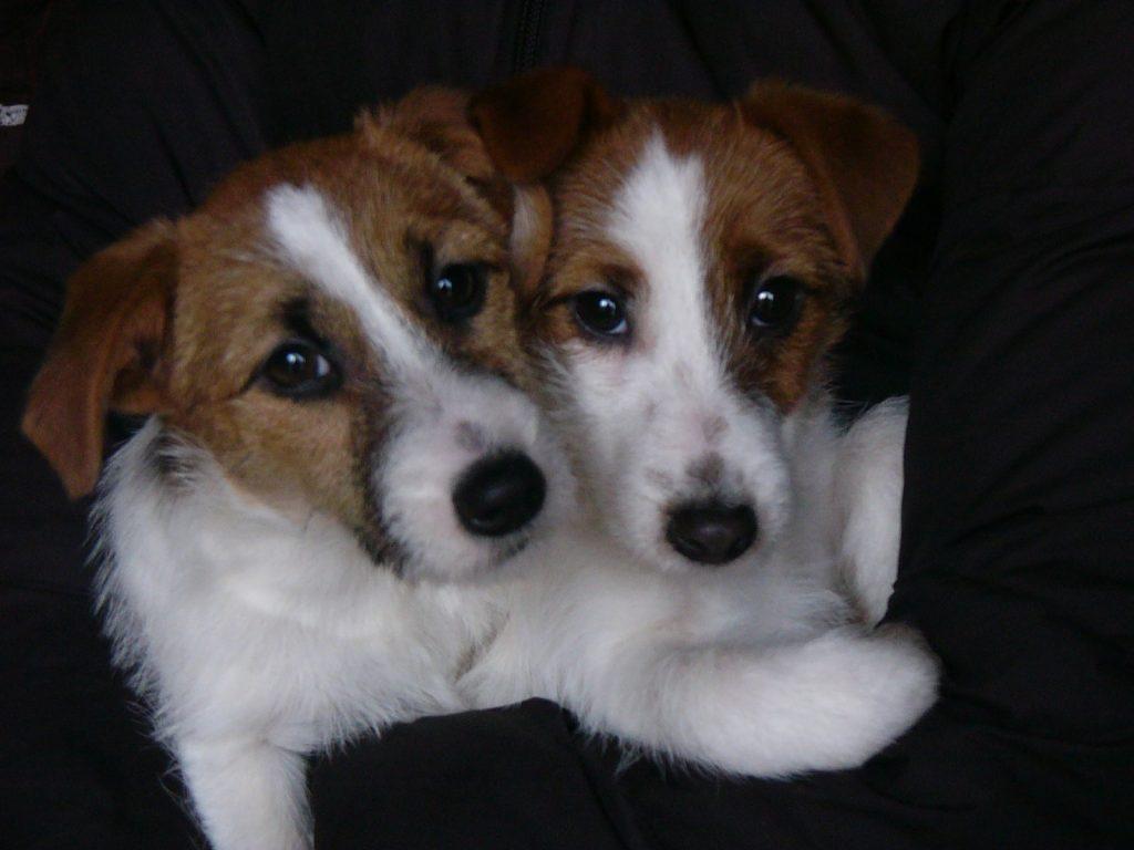子犬の月齢が3か月まで、3か月から