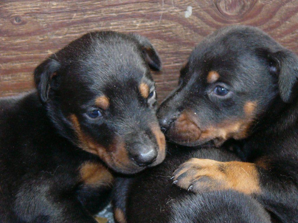 子犬の飼い方・迎え方6 生後3か月を過ぎたら
