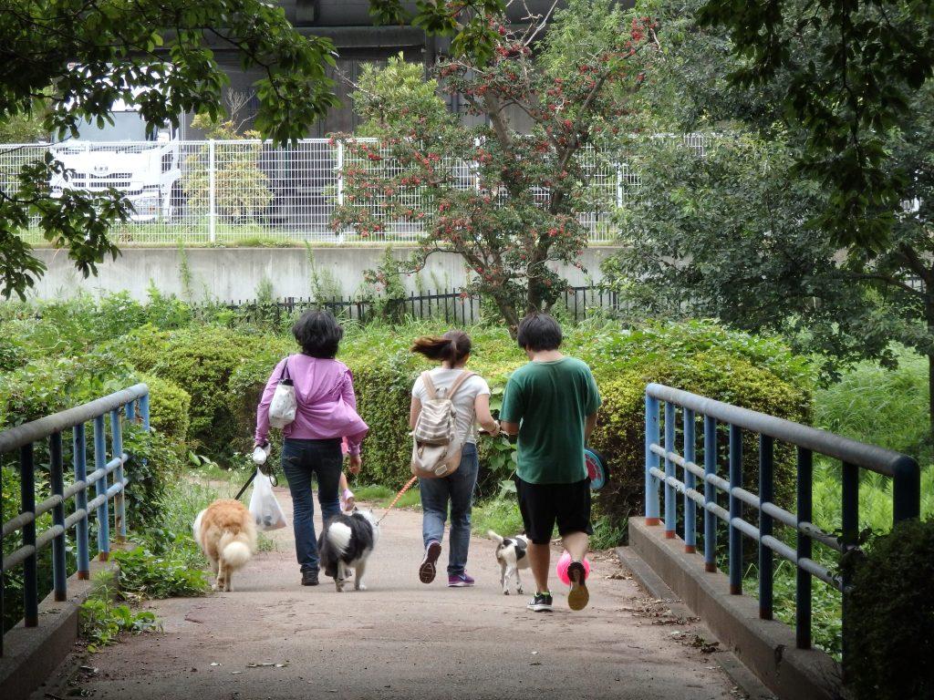 しつけ 子犬 散歩
