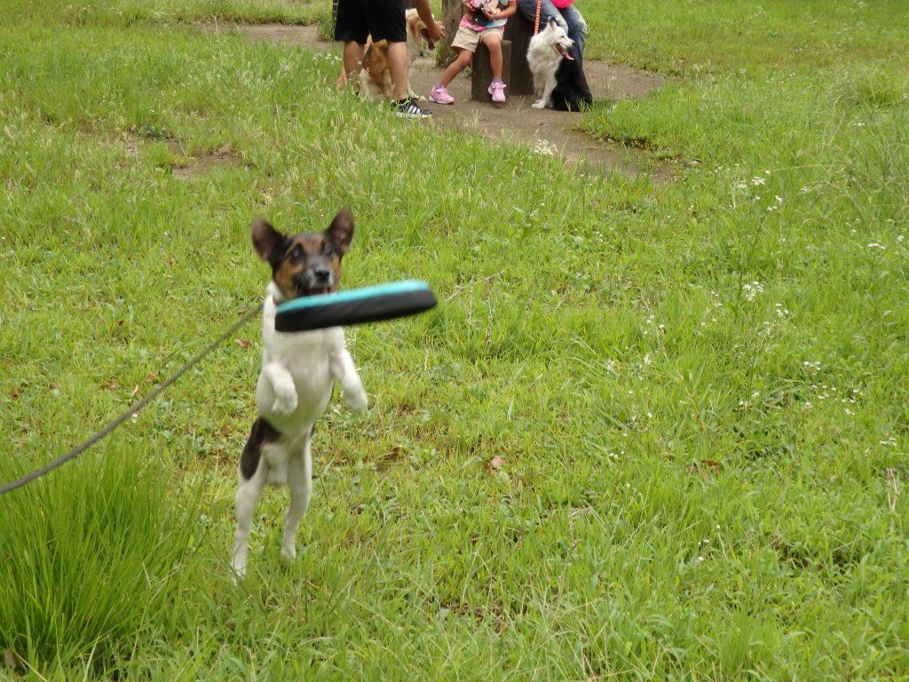 犬の運動とコミュニケーション