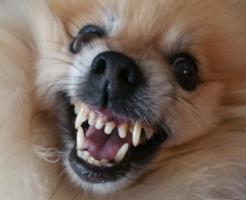 噛み犬の対処