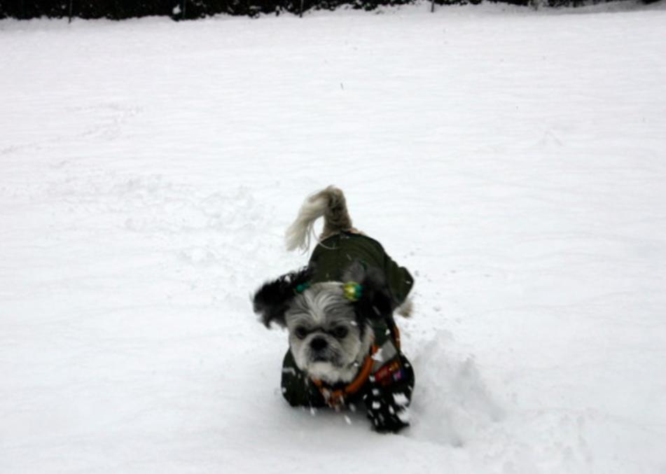 犬は寒さに強い?は昔の話かも