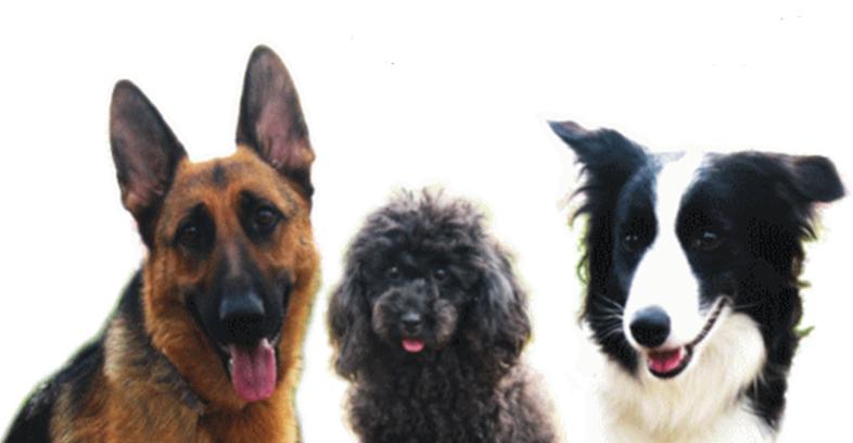 愛犬の供養、どうしてますか?