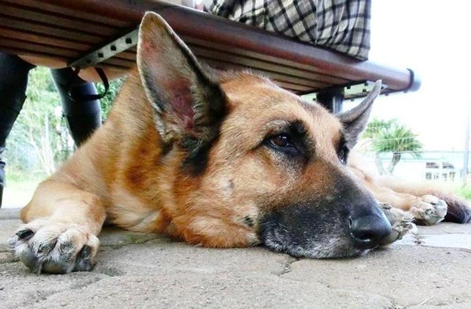 愛犬が寝たきりになったとしても