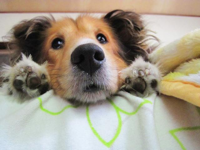 飼い主が犬に指示されて行っている3つの行動