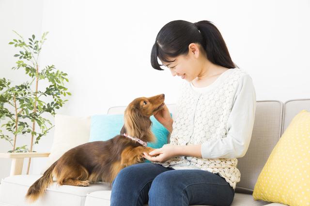 犬が飼い主を選んでいる