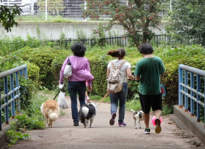 犬の散歩でのうんち、持ち帰って!