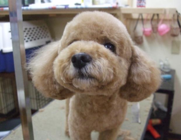 飼い主さんがいるか、いないかで態度を変える犬