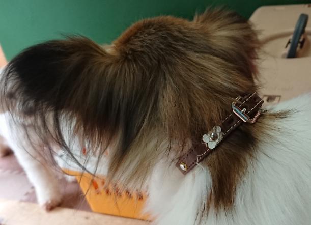 犬の首輪、緩すぎませんか?