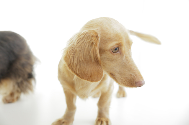 ペットショップで販売出来るのは保護犬だけ!?