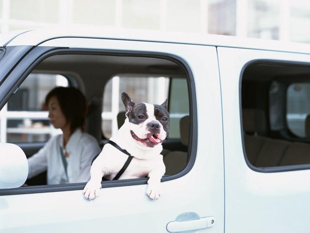 5月連休前後は犬も気温の変化に要注意!