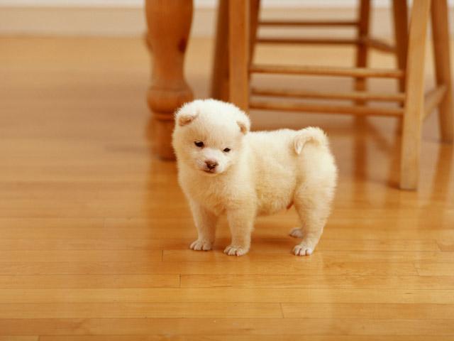 犬の問題行動ー甘噛みと飛びつきの対処方法