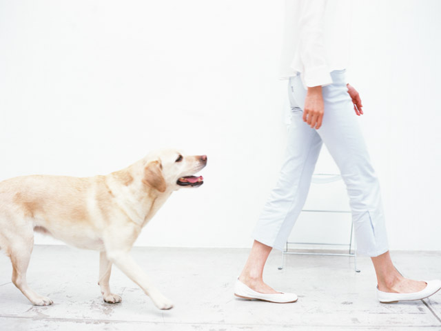 犬の本能としつけトレーニング