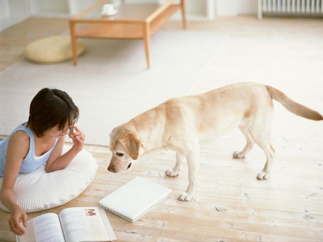 犬にかける声は常に優しく、同じ言葉で