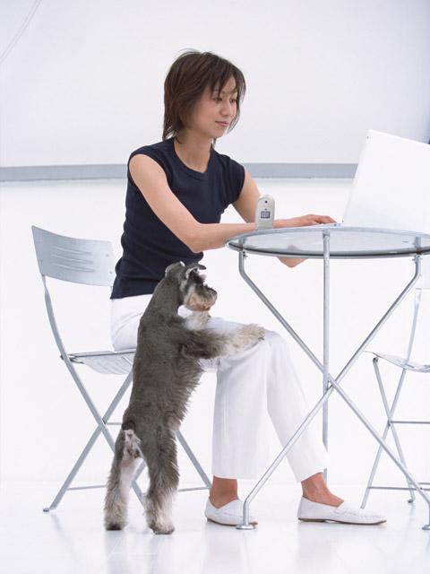 犬との触れ合いは勉強、仕事の効率を上げてくれる