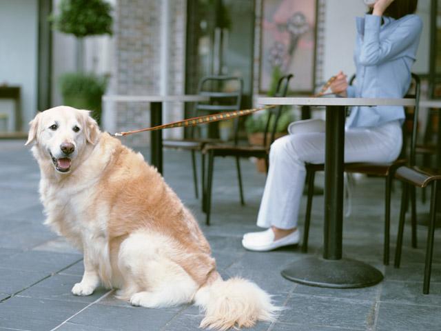 犬の「しつけ」とは?犬の「トレーニング」とは??