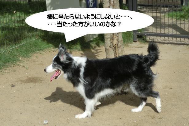 「犬も歩けば棒に当たる」、間違って覚えていた!
