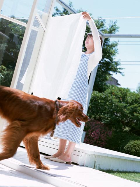 犬の夏の暑さへの注意点と対策