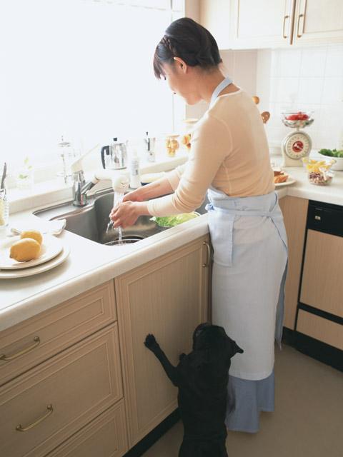 犬の問題行動ー問題行動を起こさせない環境作り