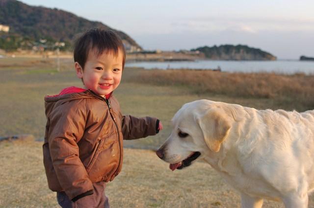 初めて会う犬との接し方