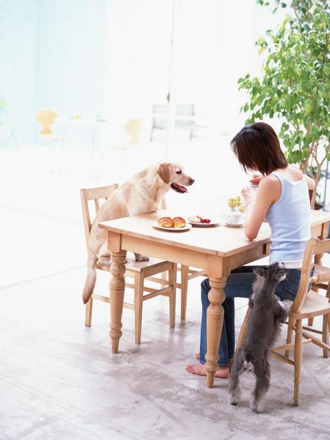 愛犬を叱ることのない犬の飼い方