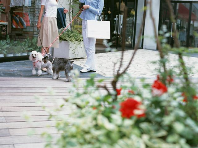 犬を飼うルールを守れなければ犬は没収?