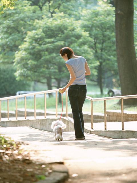犬の散歩、匂いを嗅ぐのはNG