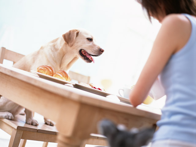 うちの犬はドッグフードを食べない?!