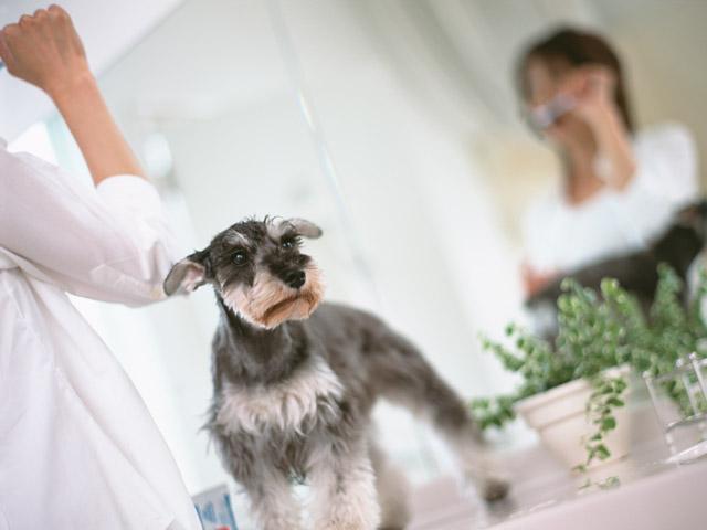 犬との生活 消臭対策(サプリメント)