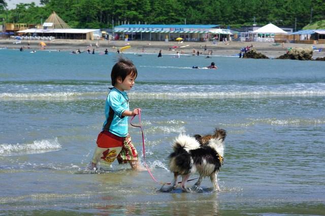 犬の先天的性格と後天的性格について