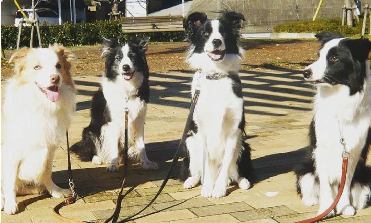 訓練士が選ぶ犬のしつけ教材ベスト3