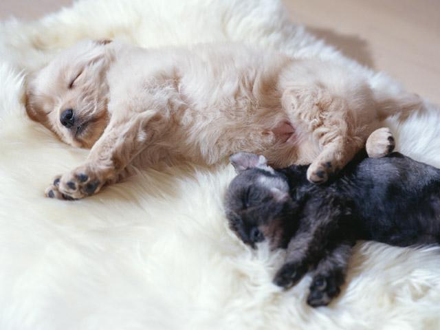 犬も寝ている時に夢を見るのか?