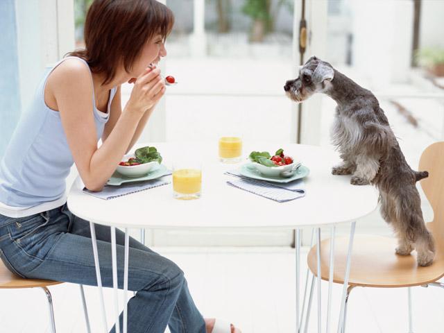 犬は肉食系雑食動物!ではドッグフードは?