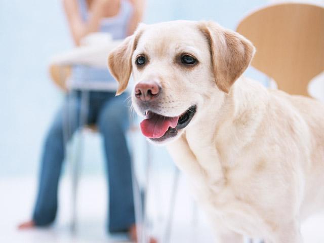犬は名前で性格が変わる?